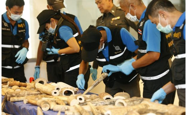 Thai police officers inspect smuggled African elephant tusk pieces at the customs department in a Bangkok airport, Thailand, 7 March 2017.